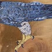 Peragrine Falcon Art Print