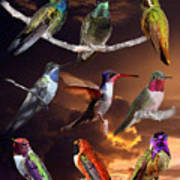 Perched Hummingbird Collage Art Print
