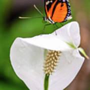 Perching Butterfly Art Print