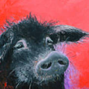 Percival The Black Pig Art Print