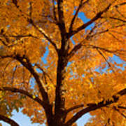 Perfect Autumn Day With Blue Skies Art Print