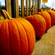 Perfect Row Of Pumpkins Art Print