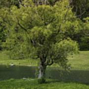 Perfect Tree Swing Art Print