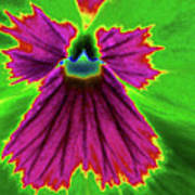 Perfectly Pansy 04 - Photopower Art Print