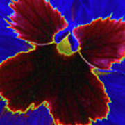 Perfectly Pansy 05 - Photopower Art Print