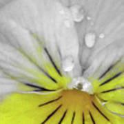 Perfectly Pansy 16 - Bw - Yellow Art Print