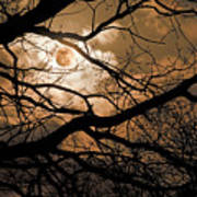 Perigee Moon In The Trees Art Print