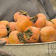 Persimmons In A Bucket Art Print