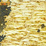 Peru And Ecuador Art Print