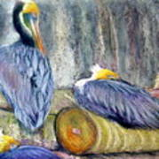 Peruvian Pelicans Three Pastel Art Print