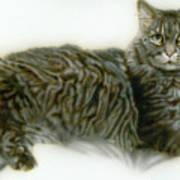 Pet Portrait - Buddy Art Print