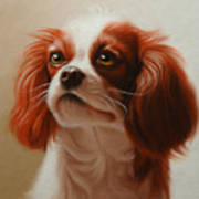 Pet Portrait Of A Cavalier King Charles Spaniel Art Print