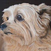 Pet Portrait Painting Commission Cairn Terrier Art Print