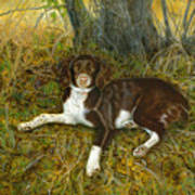 Pet Portrait - Springer Spaniel, Milly Art Print