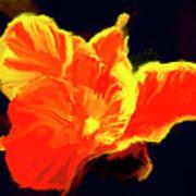 Petal Flare Art Print