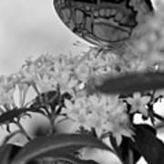 Petal Perch Art Print