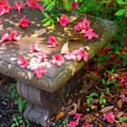 Petals On A Bench Art Print