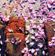 Petals On The Bricks 2 Ae Art Print