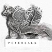 Peterbald Kitten 01 Art Print