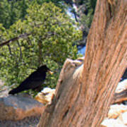 Petrified Raven At Grand Canyon Art Print