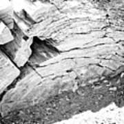 Petrified Wood #5 Art Print