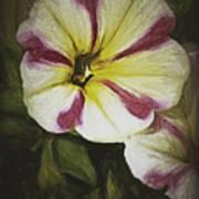 Petunia Sketch Art Print