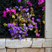 Petunias Through Wrought Iron Window Art Print