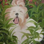 Pflower Nap Art Print