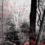Phantasm In Wildwood Art Print