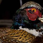 Pheasant In The Eye Art Print