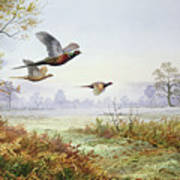 Pheasants In Flight  Art Print