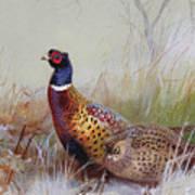 Pheasants In The Snow Art Print
