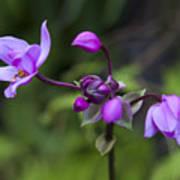 Philippine Ground Orchid Art Print