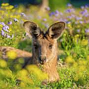Photogenic Kangaroo Art Print