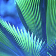 Photograph Of A Royal Palm In Blue Art Print