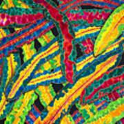 Picasso Paintbrush Croton Art Print