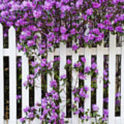 Picket Fence Rhododendron Art Print