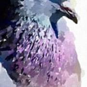 Pidgeon Art Print