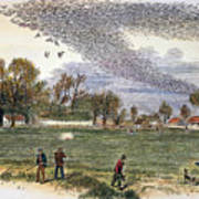 Pigeon Hunting, C1875 Art Print