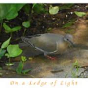 Pigeon Poster Art Print
