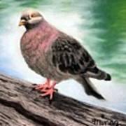 Pigeon Toes Art Print
