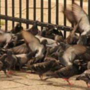 Pigeons In Venice Art Print