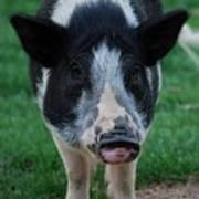 Pigs Ears Art Print