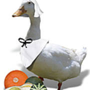 Pilgrim Duck Art Print