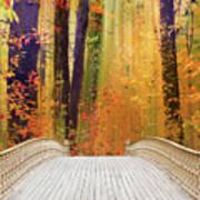 Pine Bank Splendor Art Print