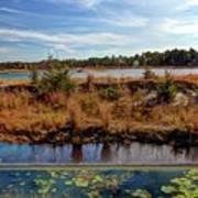 Pine Barrens Bog In New Jersey Art Print
