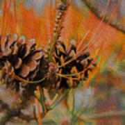 Pine Cone 2 Art Print