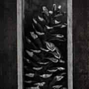 Pine Cone In A Box Still Life Art Print