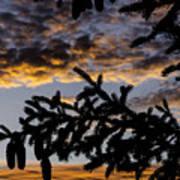 Pine Cone Sunset Art Print