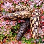 Pine Cones Art Print Botanical Garden Baslee Troutman Art Print